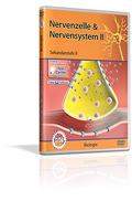 Nervenzelle & Nervensystem II - Schulfilm (DVD)
