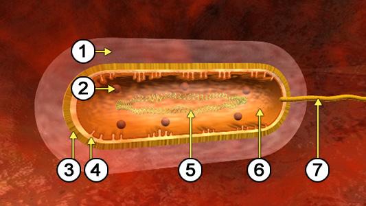 biologie dvd 13 immunsystem i. Black Bedroom Furniture Sets. Home Design Ideas
