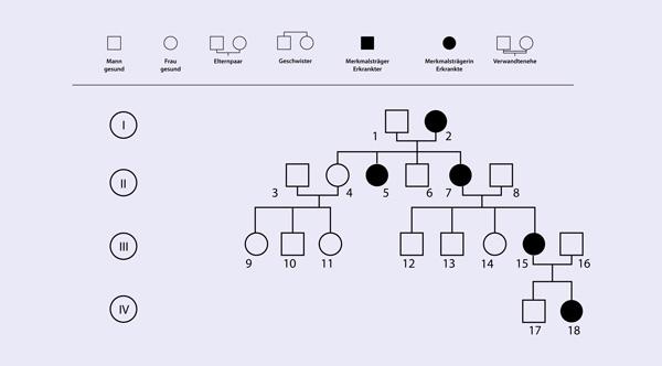Die Stammbaumanalyse Vollstandig Erklart 13