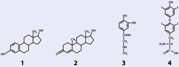 Hormonsystem III - Molekulare Grundlagen; Praxis bei Tier