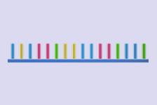 BIO-DVD048 - Epigenetik coding und non-coding DNA und RNA-Typen