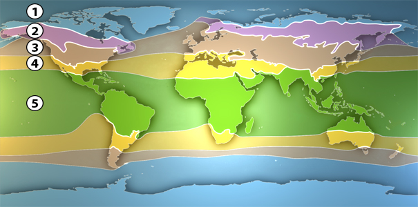 Landschaftszonen Klimazonen