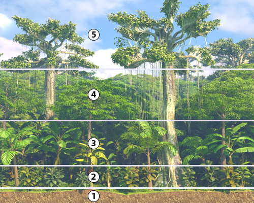 geo dvd022 landwirtschaft i tropischer regenwald stockwerkbau im tropischen regenwald 1. Black Bedroom Furniture Sets. Home Design Ideas