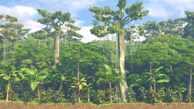 geo dvd022 landwirtschaft i tropischer regenwald stockwerkbau im tropischen regenwald 2. Black Bedroom Furniture Sets. Home Design Ideas